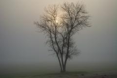 Fog_Sunrise-c53