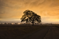 Sunset_Oak_Roseville-8059