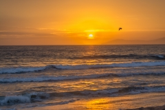 Sunset_Ventura_Bird-0511