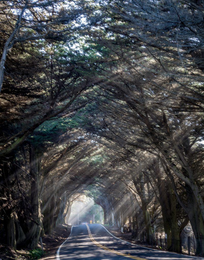tree-tunnel-1-804x1024.jpg